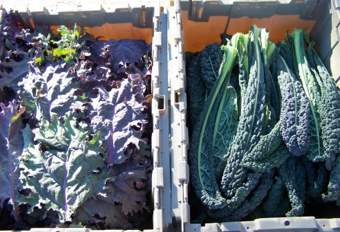 2016_11_14 Freezing Kale (8) - Copy.JPG