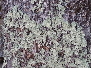 2016_12_05-painting-clay-on-bark-21