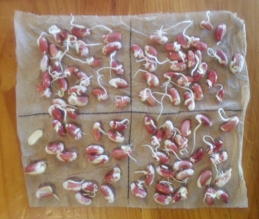 2017_03_13 Seed Germination Test (2)