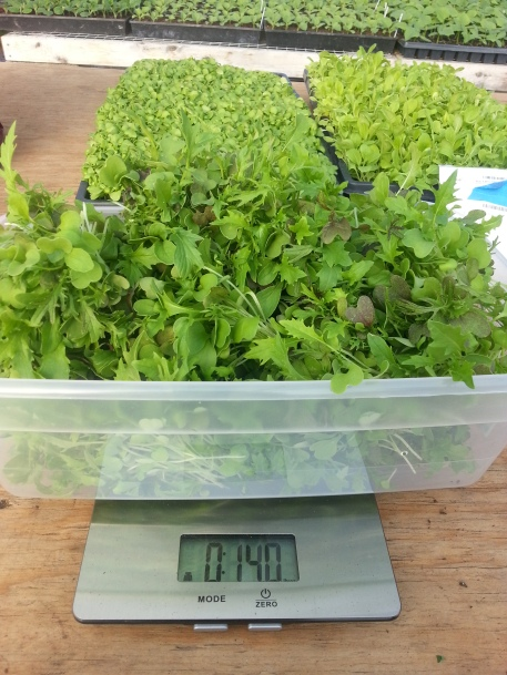 2017_06_14 Microgreens Blog Post Photos (26)